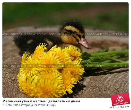 Маленькая утка и желтые цветы летним днем, фото № 224917, снято 26 мая 2007 г. (c) Останина Екатерина / Фотобанк Лори