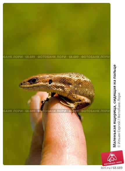 Купить «Маленькая ящерица, сидящая на пальце», фото № 68689, снято 12 июня 2007 г. (c) Ильин Сергей / Фотобанк Лори