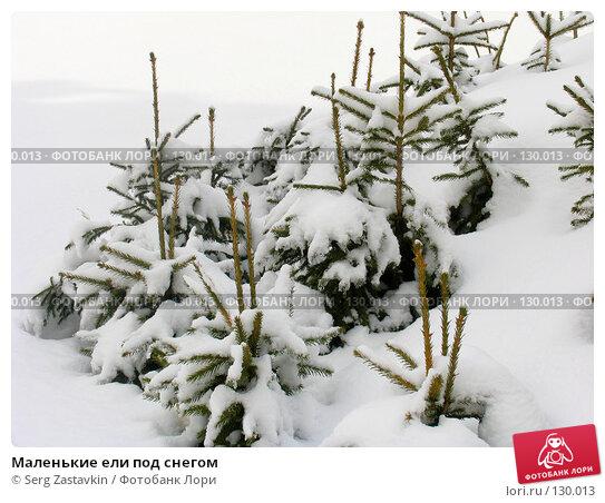 Маленькие ели под снегом, фото № 130013, снято 23 марта 2005 г. (c) Serg Zastavkin / Фотобанк Лори
