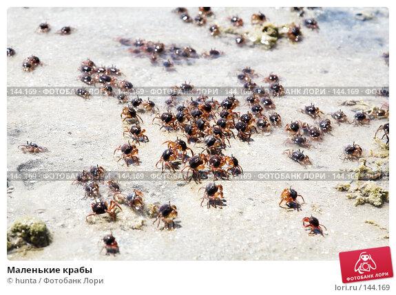 Маленькие крабы, фото № 144169, снято 11 сентября 2007 г. (c) hunta / Фотобанк Лори