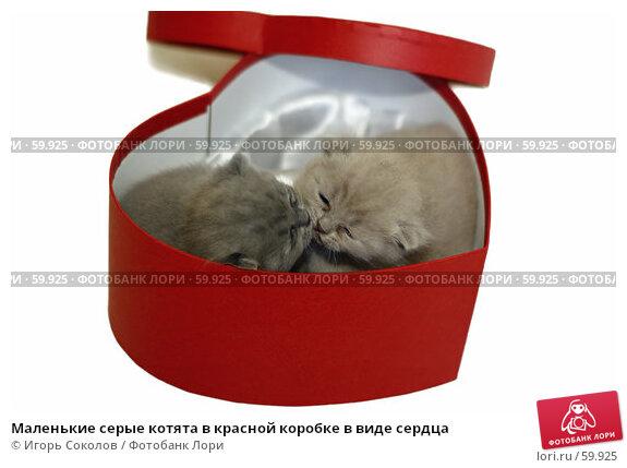 Маленькие серые котята в красной коробке в виде сердца, фото № 59925, снято 28 июня 2017 г. (c) Игорь Соколов / Фотобанк Лори