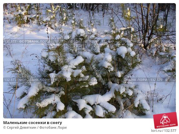 Маленькие сосенки в снегу, фото № 132577, снято 25 ноября 2007 г. (c) Сергей Девяткин / Фотобанк Лори