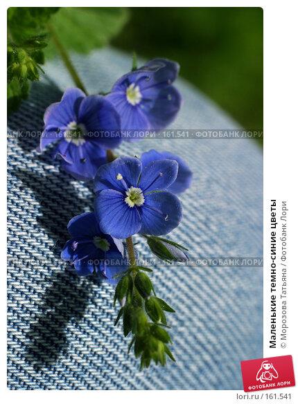 Маленькие темно-синие цветы, фото № 161541, снято 25 мая 2006 г. (c) Морозова Татьяна / Фотобанк Лори