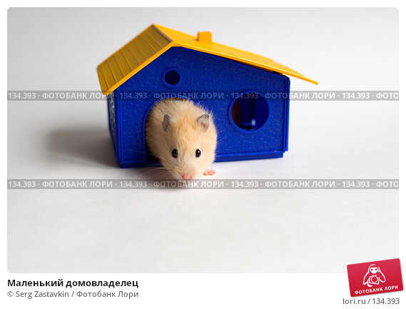 Маленький домовладелец, фото № 134393, снято 14 мая 2006 г. (c) Serg Zastavkin / Фотобанк Лори