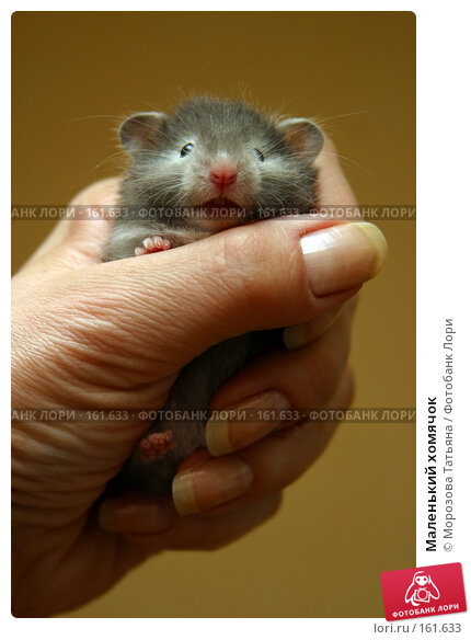 Маленький хомячок, фото № 161633, снято 21 апреля 2006 г. (c) Морозова Татьяна / Фотобанк Лори