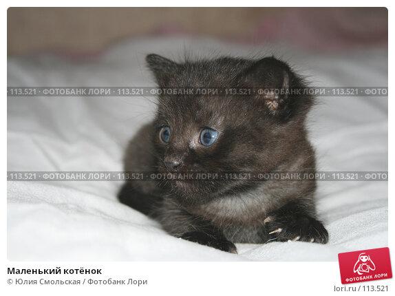 Маленький котёнок, фото № 113521, снято 7 ноября 2007 г. (c) Юлия Смольская / Фотобанк Лори