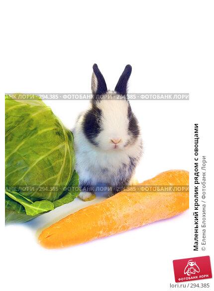 Маленький кролик рядом с овощами, фото № 294385, снято 20 мая 2008 г. (c) Елена Блохина / Фотобанк Лори