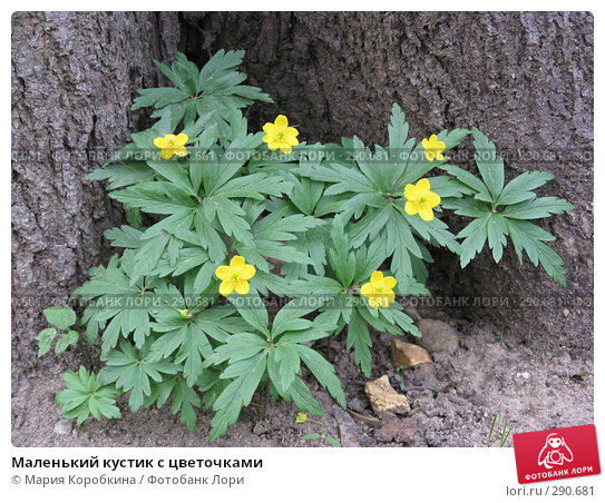 Маленький кустик с цветочками, фото № 290681, снято 1 мая 2008 г. (c) Мария Коробкина / Фотобанк Лори