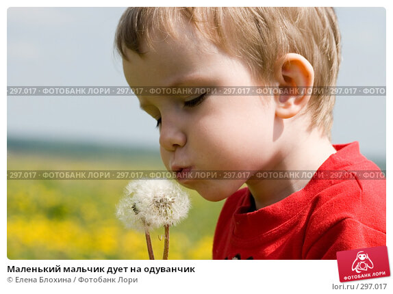 Маленький мальчик дует на одуванчик, фото № 297017, снято 18 мая 2008 г. (c) Елена Блохина / Фотобанк Лори