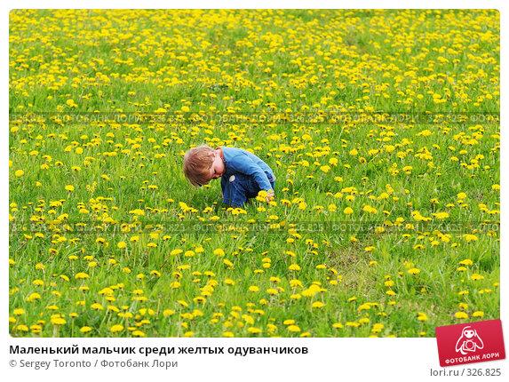 Маленький мальчик среди желтых одуванчиков, фото № 326825, снято 18 мая 2008 г. (c) Sergey Toronto / Фотобанк Лори
