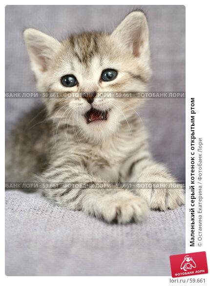 Маленький серый котенок с открытым ртом, фото № 59661, снято 4 июля 2007 г. (c) Останина Екатерина / Фотобанк Лори