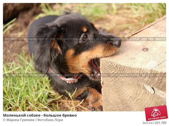 Маленькой собаке - большое бревно, фото № 201789, снято 12 августа 2006 г. (c) Марина Гуменюк / Фотобанк Лори