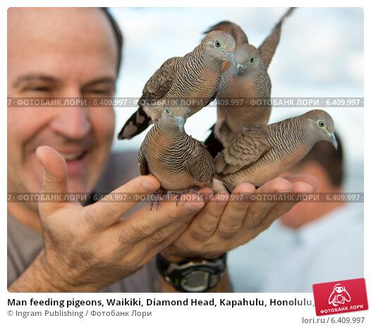 Купить «Man feeding pigeons, Waikiki, Diamond Head, Kapahulu, Honolulu, Oahu, Hawaii, USA», фото № 6409997, снято 4 февраля 2013 г. (c) Ingram Publishing / Фотобанк Лори