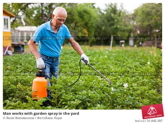 Купить «Man works with garden spray in the yard», фото № 31845397, снято 15 ноября 2019 г. (c) Яков Филимонов / Фотобанк Лори