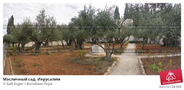 Купить «Масличный сад. Иерусалим», фото № 24593, снято 17 декабря 2017 г. (c) Gaft Eugen / Фотобанк Лори