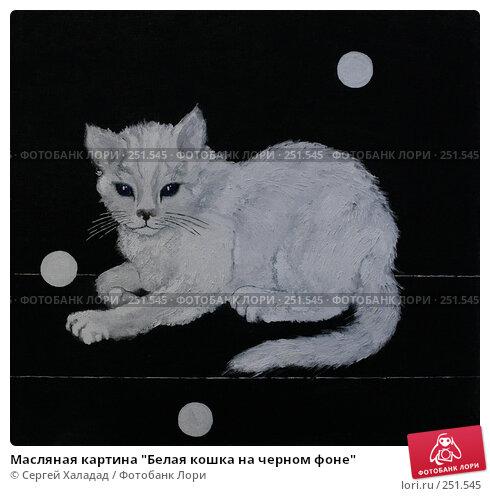 """Масляная картина """"Белая кошка на черном фоне"""", иллюстрация № 251545 (c) Сергей Халадад / Фотобанк Лори"""