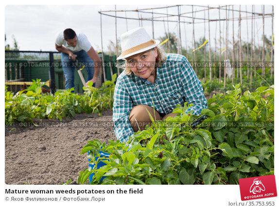 Mature woman weeds potatoes on the field. Стоковое фото, фотограф Яков Филимонов / Фотобанк Лори