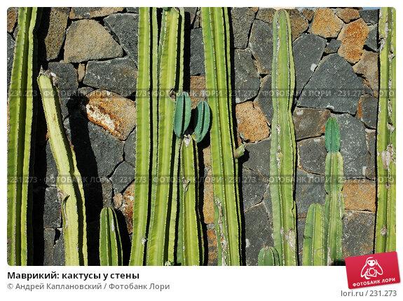 Маврикий: кактусы у стены, фото № 231273, снято 24 августа 2007 г. (c) Андрей Каплановский / Фотобанк Лори