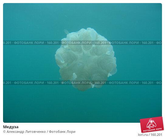 Медуза, фото № 160201, снято 27 октября 2016 г. (c) Александр Литовченко / Фотобанк Лори