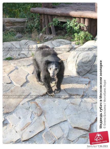 Купить «Медведь губач в Московском зоопарке», фото № 136093, снято 2 октября 2007 г. (c) Елена Блохина / Фотобанк Лори