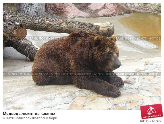 Медведь лежит на камнях, фото № 66977, снято 28 июля 2007 г. (c) Катя Белякова / Фотобанк Лори