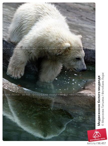 Медвежонок белого медведя, фото № 98457, снято 12 апреля 2006 г. (c) Морозова Татьяна / Фотобанк Лори