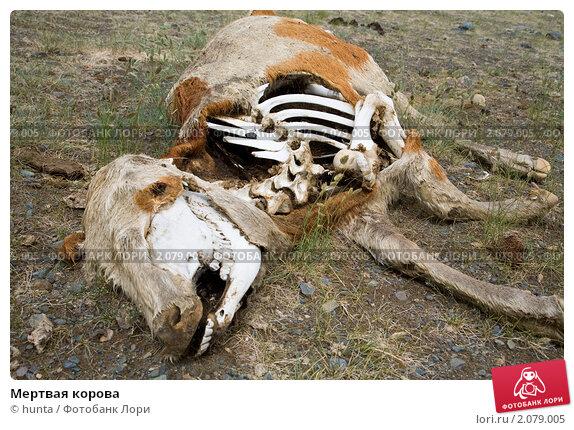к чему снятся мертвые коровы краски Тиккурила, при