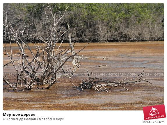 Мертвое дерево, фото № 54693, снято 8 мая 2007 г. (c) Александр Волков / Фотобанк Лори