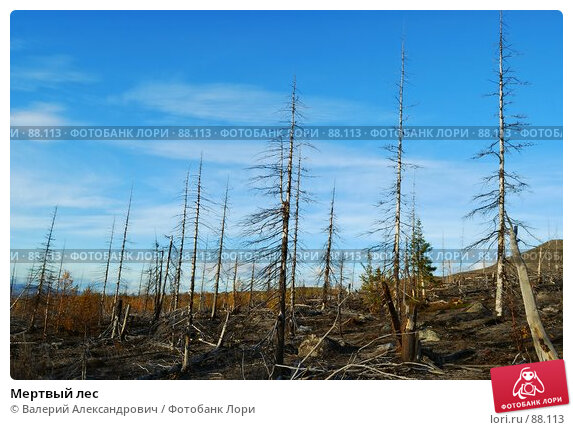 Купить «Мертвый лес», фото № 88113, снято 21 ноября 2017 г. (c) Валерий Александрович / Фотобанк Лори