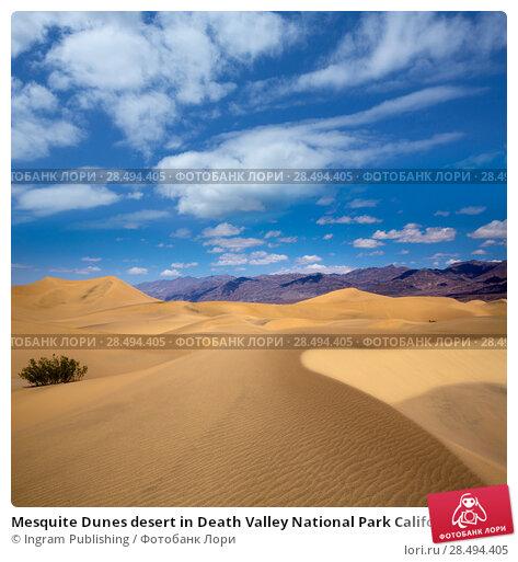 Купить «Mesquite Dunes desert in Death Valley National Park California», фото № 28494405, снято 22 июля 2019 г. (c) Ingram Publishing / Фотобанк Лори