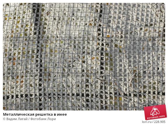 Металлическая решетка в инее, фото № 228905, снято 9 ноября 2005 г. (c) Вадим Лигай / Фотобанк Лори
