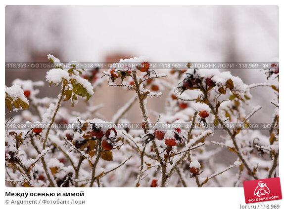 Между осенью и зимой, фото № 118969, снято 16 ноября 2007 г. (c) Argument / Фотобанк Лори