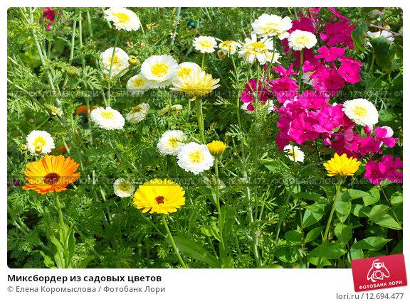 Купить «Миксбордер из садовых цветов», эксклюзивное фото № 12694477, снято 3 августа 2015 г. (c) Елена Коромыслова / Фотобанк Лори