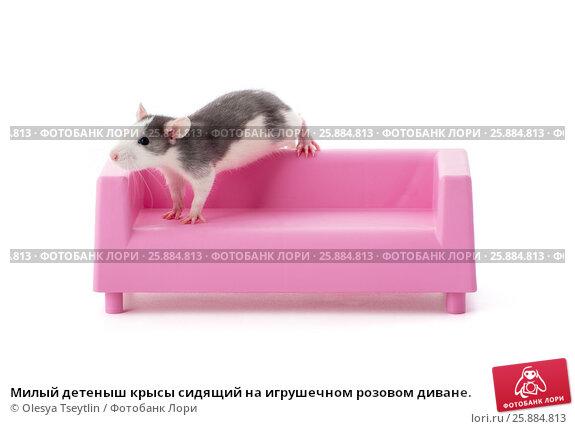 Купить «Милый детеныш крысы сидящий на игрушечном розовом диване.», фото № 25884813, снято 20 июня 2019 г. (c) Olesya Tseytlin / Фотобанк Лори