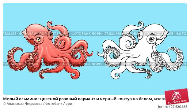 Купить «Милый осьминог цветной розовый вариант и черный контур на белом, изолированно на голубом фоне. Морское головоногое животное, моллюск. Иллюстрация в мультипликационном стиле, ручной рисунок, раскраска», иллюстрация № 27526665 (c) Анастасия Некрасова / Фотобанк Лори