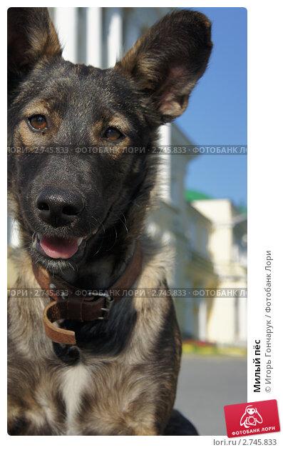 Милый пёс. Стоковое фото, фотограф Игорь Гончарук / Фотобанк Лори