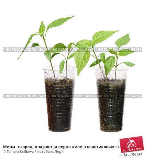 Мини - огород, два ростка перца чили в пластиковых стаканах, изолированное изображение, фото № 54937, снято 23 июня 2007 г. (c) Tamara Kulikova / Фотобанк Лори