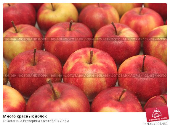 Купить «Много красных яблок», фото № 105469, снято 10 октября 2007 г. (c) Останина Екатерина / Фотобанк Лори