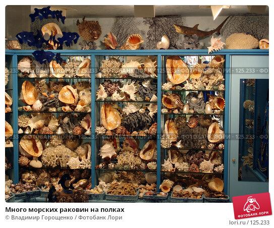 Много морских раковин на полках, эксклюзивное фото № 125233, снято 28 июля 2005 г. (c) Владимир Горощенко / Фотобанк Лори