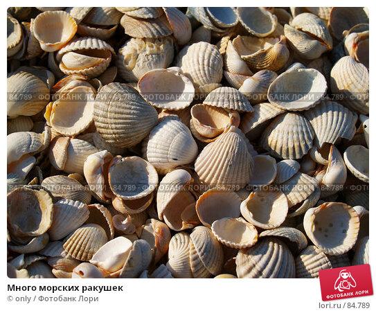 Много морских ракушек, фото № 84789, снято 6 августа 2007 г. (c) only / Фотобанк Лори