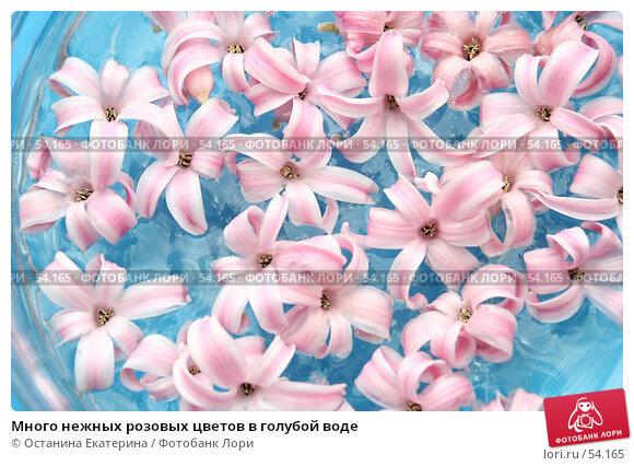 Много нежных розовых цветов в голубой воде, фото № 54165, снято 13 марта 2007 г. (c) Останина Екатерина / Фотобанк Лори