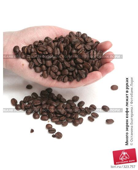 Много зерен кофе лежат в руках, фото № 323757, снято 20 ноября 2007 г. (c) Останина Екатерина / Фотобанк Лори