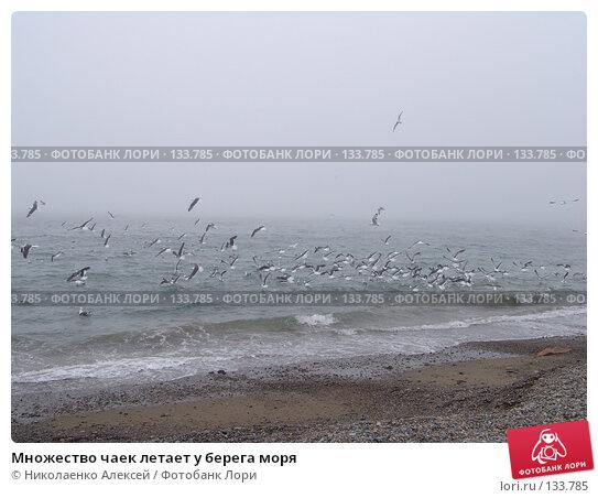 Множество чаек летает у берега моря, фото № 133785, снято 11 июня 2005 г. (c) Николаенко Алексей / Фотобанк Лори