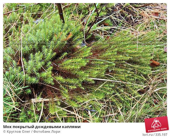 Мох покрытый дождевыми каплями, фото № 335197, снято 8 июня 2008 г. (c) Круглов Олег / Фотобанк Лори