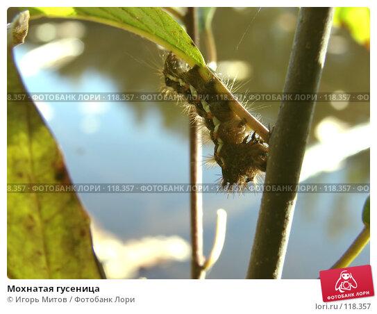 Купить «Мохнатая гусеница», фото № 118357, снято 23 сентября 2007 г. (c) Игорь Митов / Фотобанк Лори