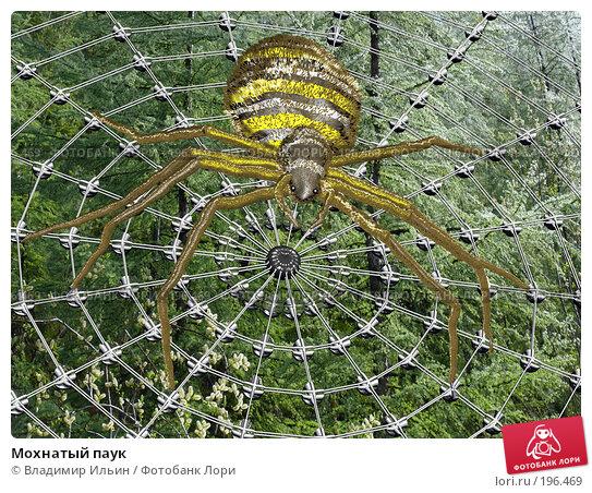 Мохнатый паук, иллюстрация № 196469 (c) Владимир Ильин / Фотобанк Лори