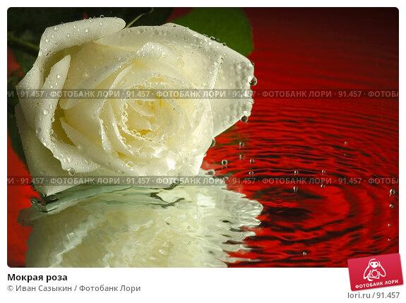 Мокрая роза, фото № 91457, снято 5 декабря 2003 г. (c) Иван Сазыкин / Фотобанк Лори