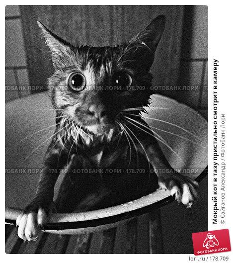 Купить «Мокрый кот в тазу пристально смотрит в камеру», фото № 178709, снято 15 декабря 2017 г. (c) Сайганов Александр / Фотобанк Лори