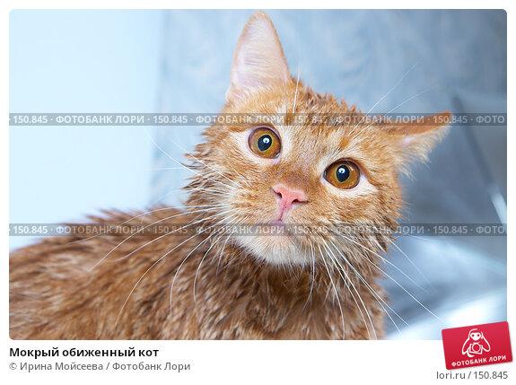 Мокрый обиженный кот, фото № 150845, снято 16 декабря 2007 г. (c) Ирина Мойсеева / Фотобанк Лори