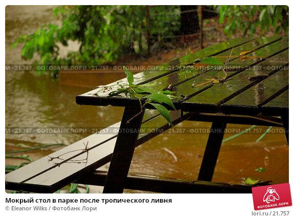 Мокрый стол в парке после тропического ливня, фото № 21757, снято 2 апреля 2007 г. (c) Eleanor Wilks / Фотобанк Лори